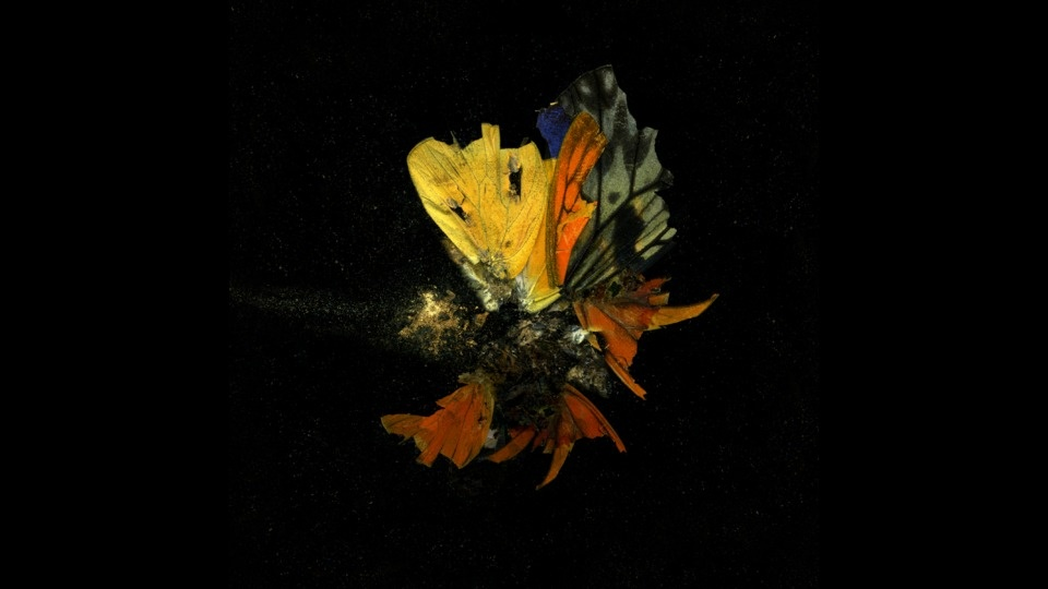 Insecticide 13by Mat Collishaw