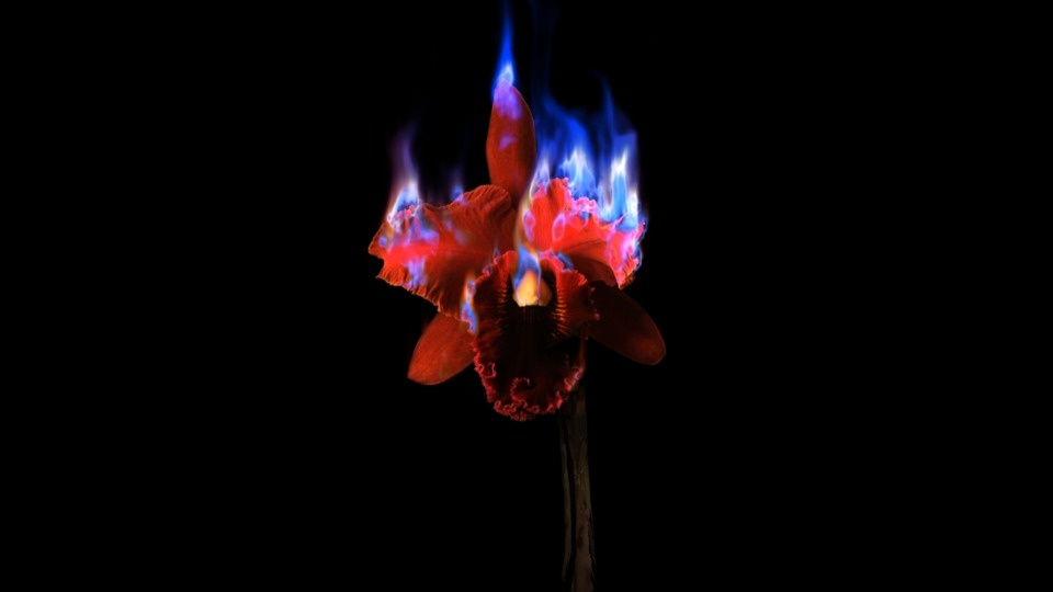 Burning Flowerby Mat Collishaw