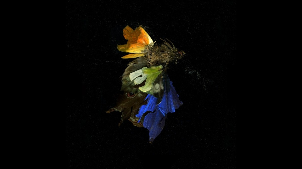 Insecticide 15by Mat Collishaw