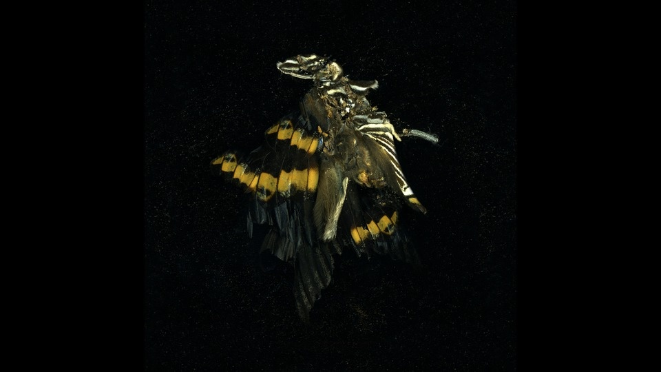 Insecticide 17by Mat Collishaw