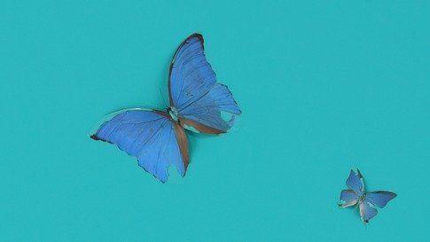 Bognor Blue