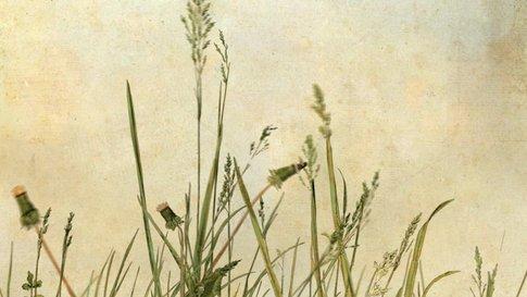 Whispering Weeds