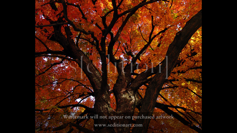 Autumn Fire by Michelle Lill