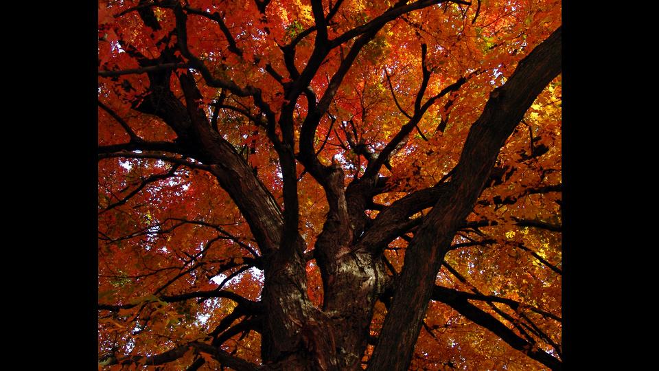 Autumn Fireby Michelle Lill