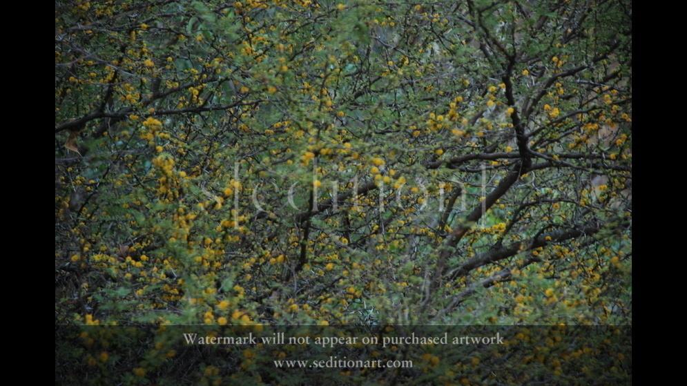 Lost In Nature by Ramiro Baldivieso