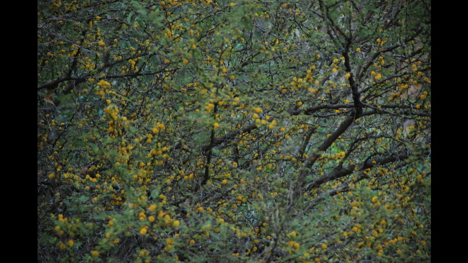 Lost In Natureby Ramiro Baldivieso