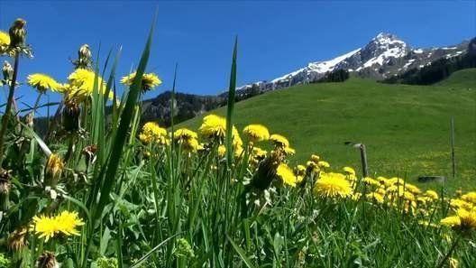 4mn of Swiss alp