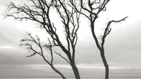 Tidal Tree On Port Royal Sound, Mitchellville Beach Park, Hilton Head, SC
