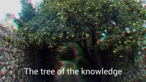 The tree of the knowledge