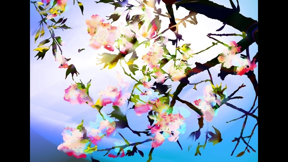 Cherry Blossom 0625_01by Dolors Manrubia