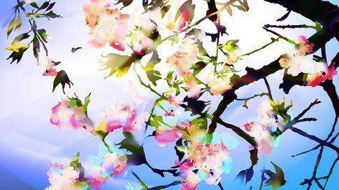 Cherry Blossom 0625_01