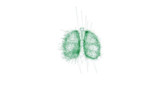 Lungs (White Version)