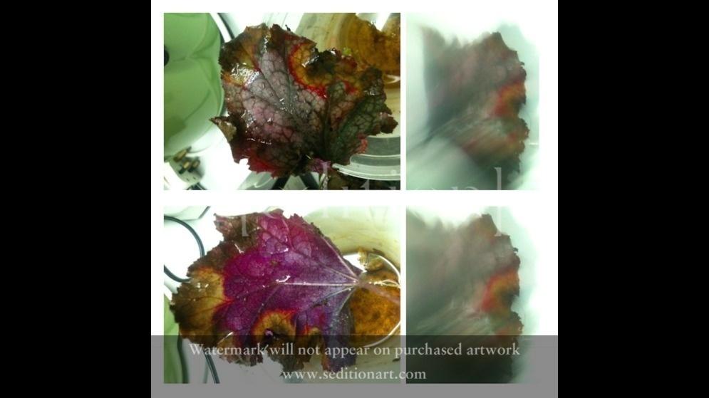 Thinking Edibles Reversible Food by jane camellia sarkar
