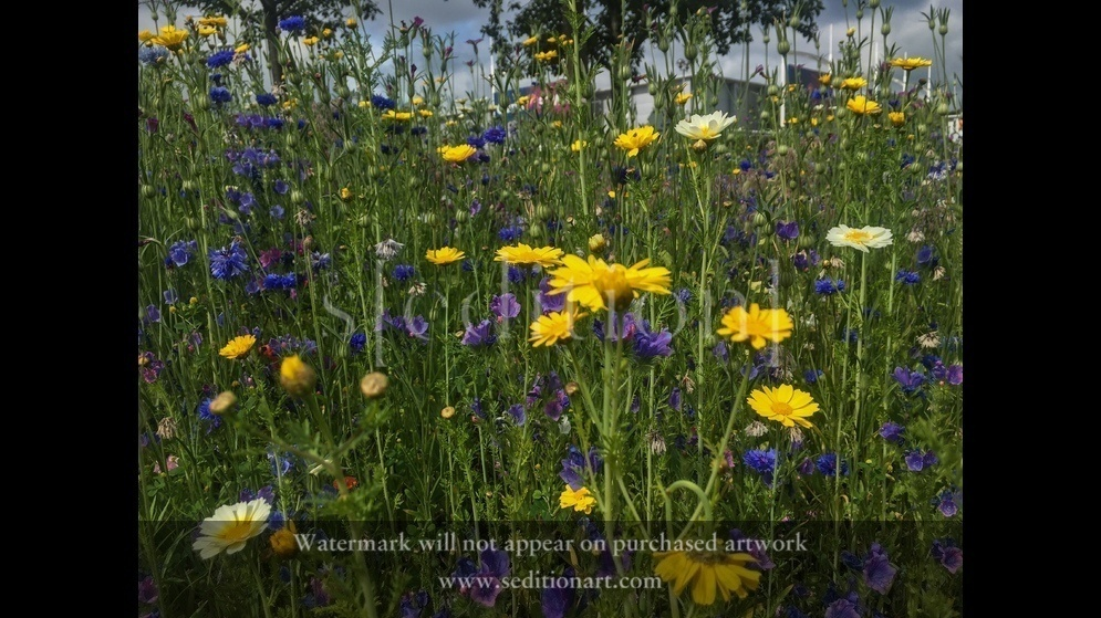 Meadow by Forestarts