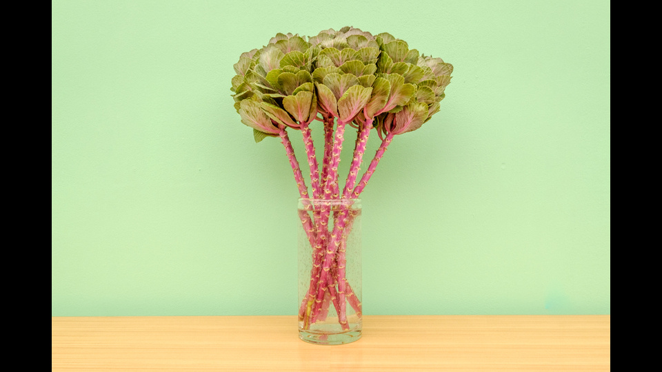 Cabbage flowers (are nicer than expected)by Guy Nesher
