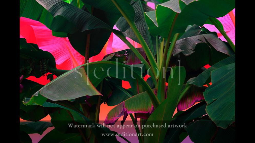 Palmtrees on acid by Slava Semeniuta