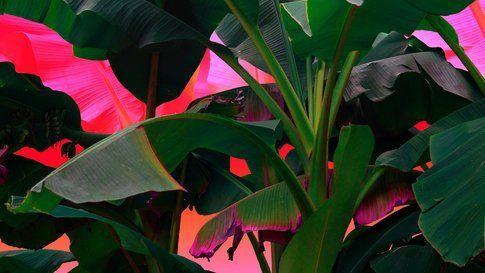 Palmtrees on acid