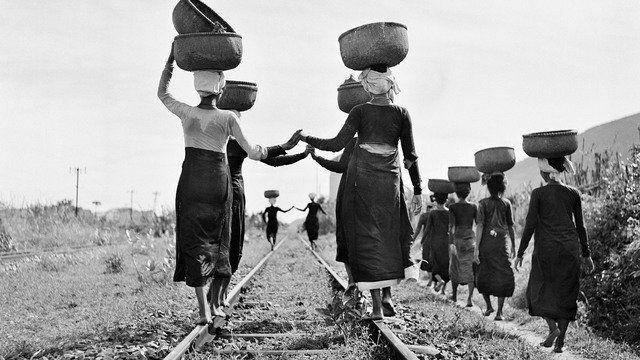 1952,印度支那半岛伯劳