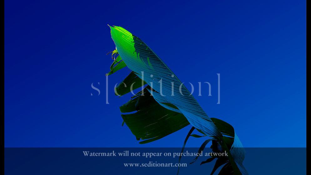 The End Of Old Neon Leaf by Slava Semeniuta