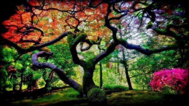 Natures Zen