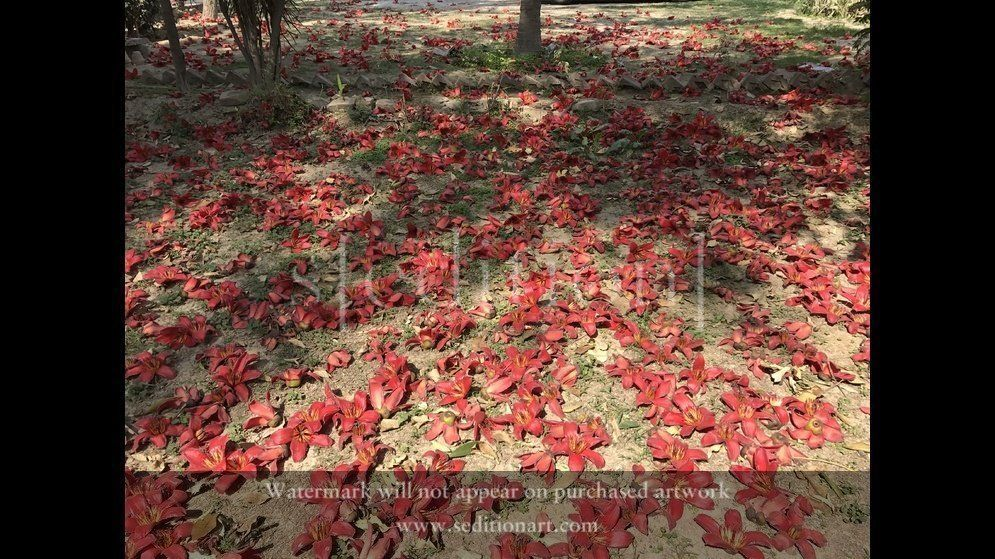 Fallen Flowers (still image) by Imran Qureshi