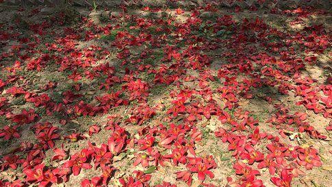 Fallen Flowers (still image)