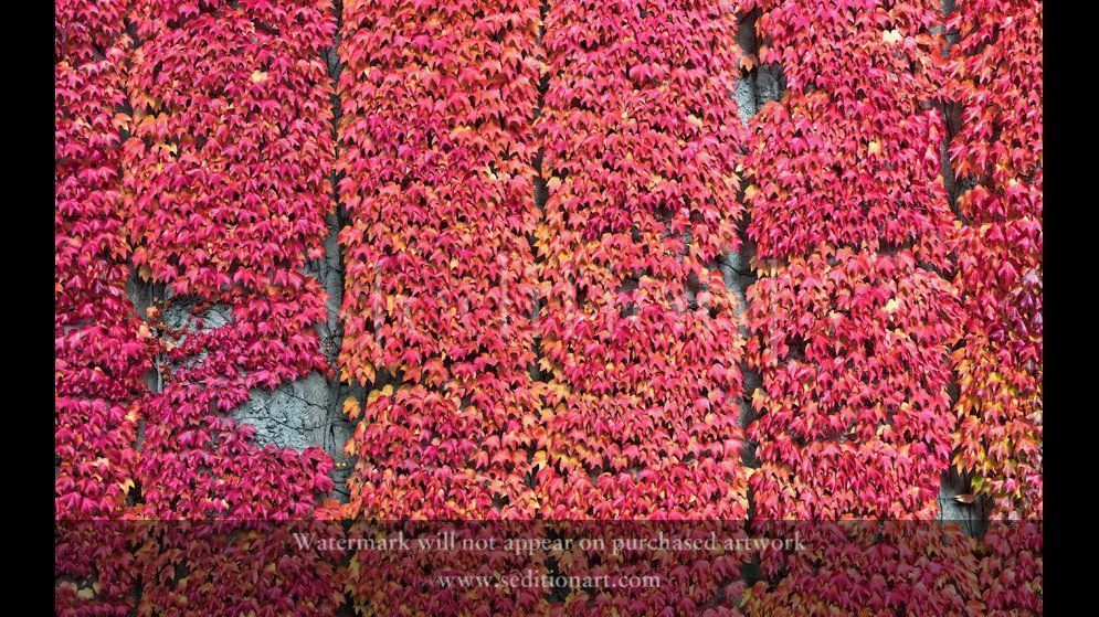 Fall Pattern by Chris Kelch