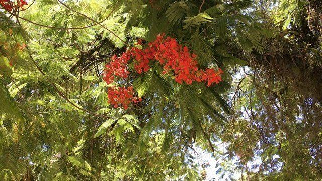 Floranation