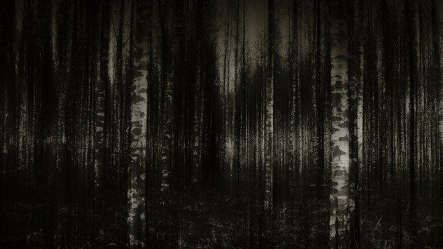 Birches in black