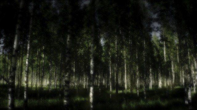 Dark birchflight