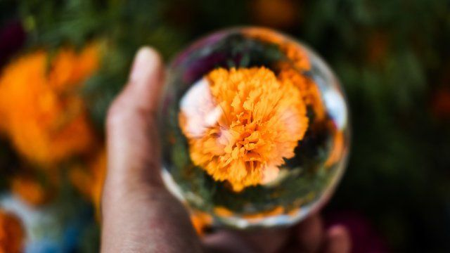 Encapsulated flower