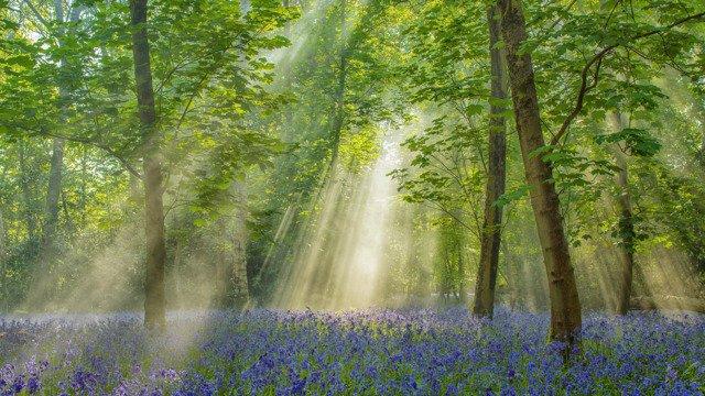 Henley Wood