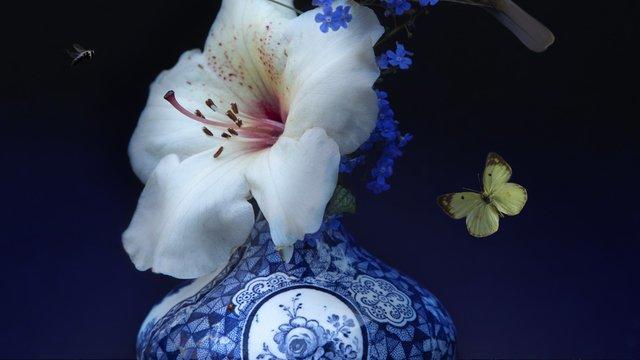 """Flora Art """"Royal Bird"""""""