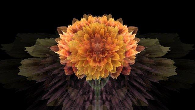 Cat-Flower#09