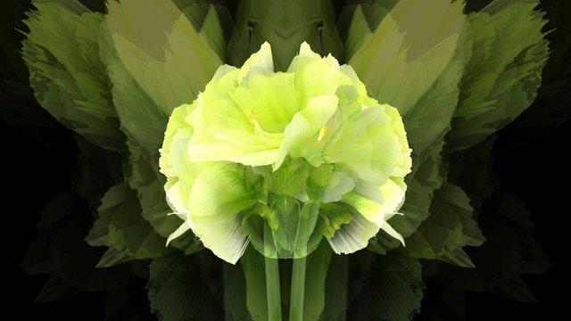 Cat-Flower#16
