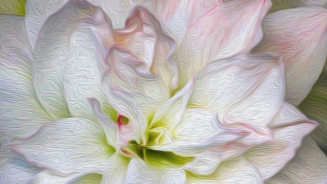 White Amaryllis 300ppi