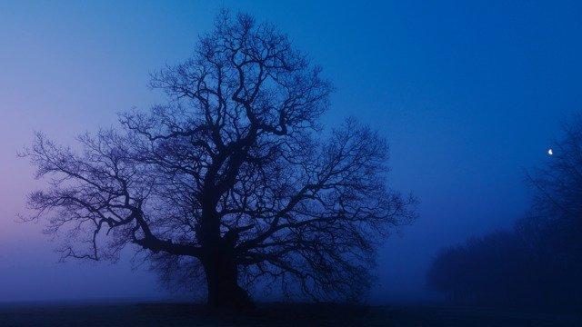 Hatfield House Oak