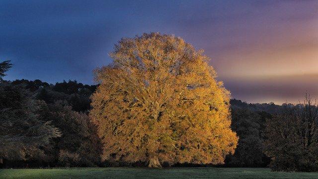 Perridge Oak