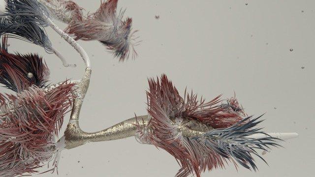 Benthic Flora 1
