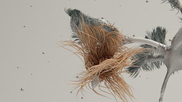 Benthic Flora 2
